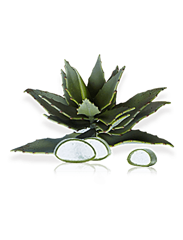 ingredient_aloe