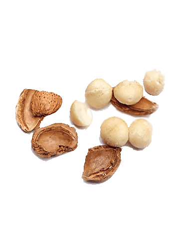 Ingredient_macadamia